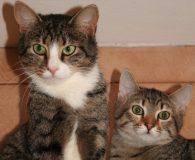 Name: Cully und Alyosha Rasse: Europäisch Kurzhaar Alter: geb. ca. 2009/2010 […]