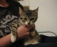 Name: 4 Katzenkinder Rasse: Europäisch Kurzhaar Alter: ca. 2 Monate Ort: […]