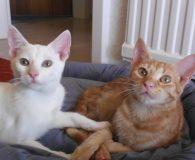 Name: Lulu und Canela Rasse: Europäisch Kurzhaar Alter: 6 Monate Ort: […]