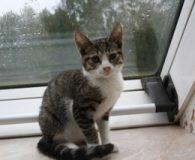 Name: Mascha Rasse: Europäisch Kurzhaar Alter: ca. 4-5 Monate Ort: Gudow […]