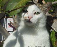 Name: Mitsy Rasse: Europäisch Kurzhaar Alter: ca. 6 Monate Ort: Kreta/Griechenland […]
