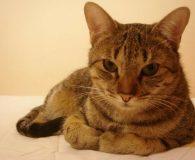 Name: Moschino Rasse: Europäisch Kurzhaar Alter: ca. 7 Monate Ort: Spanien […]