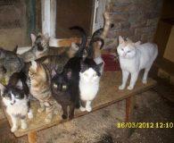 Wir starten einen neuen Aufruf für die Katzen. Vanya von der […]