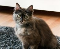 Name: Scarlett Rasse: Maine coon/Mix Alter: geb. ca Juli 2011 Ort: […]