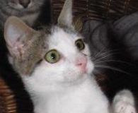Name: Alba Rasse: Europäisch Kurzhaar Alter: geb. ca. Juni 2012 Ort: […]