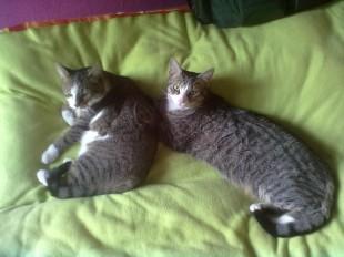 Annas Katzen