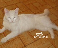 Name: Floc Rasse: Norweger Mix Alter: geb. ca. 2010-2011 Ort: Spanien/Sallent […]
