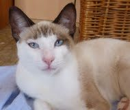 Name: Conny Rasse: Siam/Snowshoe-Mix Alter: geb. ca. März 2013 Ort: Spanien/Malaga […]