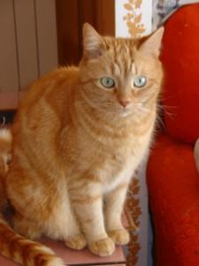 Katzenjunge  Oliver