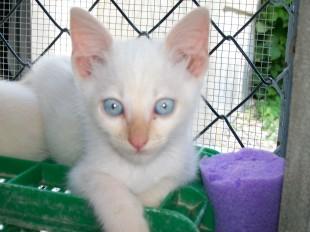 kittens george 5877