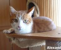 Name: Alexander Rasse: Europäisch Kurzhaar Alter: geb. ca. Juni 2011 Ort: […]