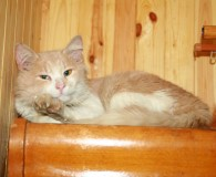 Name: Lel Rasse: Langhaar/Norweger Mix Alter: geb. ca. Juli 2012 Ort: […]
