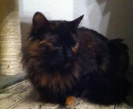Name: Jana Rasse: Maine coon Mix Alter: geb. ca. September 2011 […]