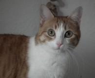 Name: Casta Rasse: Europäisch Kurzhaar Alter: geb. ca. August 2012 Ort: […]