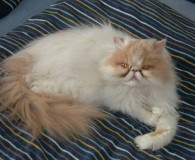 Name: Kitty Rasse: Perser Alter: geb. 26.05.2000 Ort: 58638 Iserlohn Geschlecht: […]
