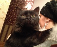 Name: Kardinal Rasse: Waldkatze Norweger Mix Alter: geb. ca. 2013 Ort: […]