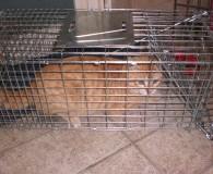 Wilde Katzen von Sallent Und wieder konnten mehrere Katzen eingefangen und […]