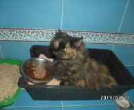 Name: Cherry Rasse: Waldkatzen Maine coon Mix Alter: geb. ca. August […]