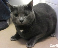 Name: Garfield Rasse: Russisch  Blau Mix Alter: geb. ca. Januar 2011 […]