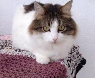 Name: Belo Rasse: Waldkatzen/Norweger Mix/Maine coon Alter: geb. ca. 2011 Ort: […]