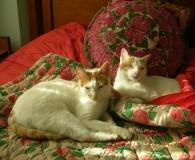 Name: Tom und Jerry Rasse: Europäisch Kurzhaar Alter: geb. ca. Mai […]
