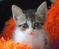 Name: Artemisia Rasse: Europäisch Kurzhaar Alter: geb. ca. Juni 2014 Ort: […]