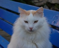 Name: Melvin Rasse: Maine Coon/Walkatzen Mix Alter: geb. ca. 2008 Ort: […]