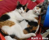 Name: Karli und Kaia Rasse: Europäisch Kurzhaar Alter: geb. ca. April […]
