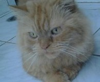 Name: Garfield Rasse: Perser Mix Alter: geb. ca. 2008 Ort: Kreta/Griechenland […]