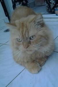 Garfield 1