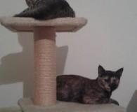 Name: Tiger und Lesley Rasse: Europäisch Kurzhaar Alter: geb. ca. Mau […]
