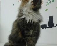 Name: Jemina Rasse: Waldkatzen-Mix Alter: geb. ca. 2007 Ort: Kreta/Griechenland Geschlecht: […]