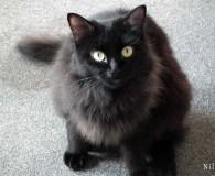 Name: Nila Rasse: Norwegische Waldkatze Mix Alter: geb. ca. März 2012 […]