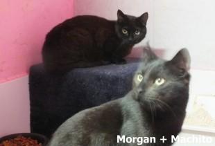 Morgan + Machito_0001