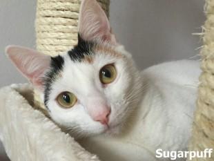 Sugarpuff_0001