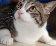 Name: Pumuky und Kitty Rasse: Europäisch Kurzhaar Alter: geb. ca. 2005/2011 […]