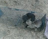 …mehr Bilder Marc, unser Tierheimleiter von Seproan Sallent, bemüht sich auch […]