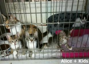 Alice + Kids_0004