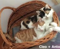 Name: Cleo und Anthony Rasse: LanghaarMix/EuropäischKurzhaar Alter: geb. ca. 2009/Mai 2015 […]