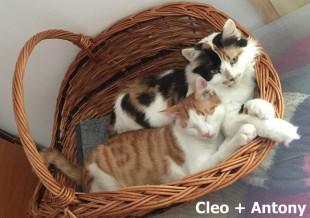 Cleo + Antony_0001