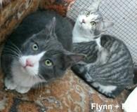 Name: Flynn und Franco Rasse: Europäisch Kurzhaar Alter: geb. ca. September […]