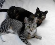Name: Mimi und Luna Rasse: Europäisch Kurzhaar Alter: geb. Mai 2010/ […]