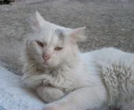 Name: Blanco Rasse: Waldkatzen Mix Alter: geb. ca. 2008 Ort: Kreta/Griechenland […]