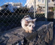 Name: Cotton Rasse: Waldkatzen-Mix Alter: geb. ca. 2014 Ort: Kreta/Griechenland […]