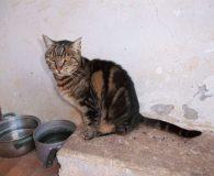 Name: Roxanne Rasse: Europäisch Kurzhaar Alter: geb. ca. 2011 Ort: Kreta/Griechenland […]