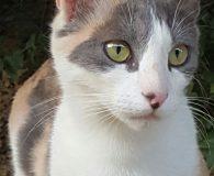 Name: Topolina Rasse: Europäisch Kurzhaar Alter: geb. ca. August 2015 Ort: […]