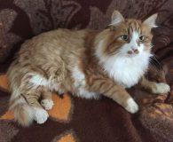Name: Mustachio Pistachio Rasse: Waldkatzen Mix Alter: geb. ca. Juni 2012 […]