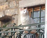Name: Hector Rasse: Waldkatzenmix Alter: geb. ca. August 2016 Ort: Kreta/Griechenland […]