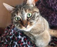 Name: Kitty und Kuki Rasse: Europäisch Kurzhaar Alter: geb. ca. Juli […]