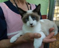 Name: Woody Rasse: Snowshoe/Siam Mix Alter: geb. ca. Mai 2017 Ort: […]